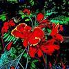 DMITRI IVNITSKI - Flowers 2017