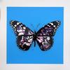 MARTIN WHATSON - BUTTERFLY (VIP PURPLE)