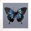 MARTIN WHATSON - BUTTERFLY (BLUE)