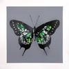 MARTIN WHATSON - BUTTERFLY (GREEN)