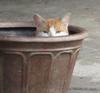 ALAN FEUER - CAT IN A POT
