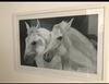 ALBERTO GARAZI - White horses