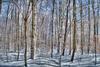 MATTHEW LERMAN - Tranquility Winter